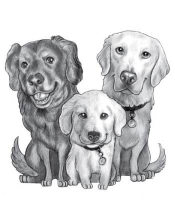 Black and White Pencil Drawing of 3 Dogs